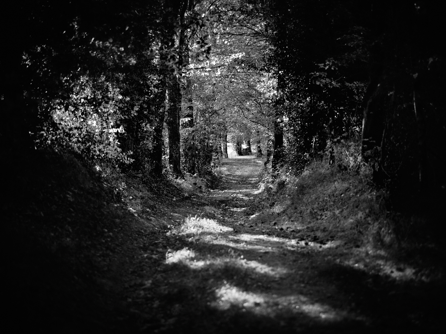 Jon Wyatt Photography - Woodland path near Vayres in Limousin, France