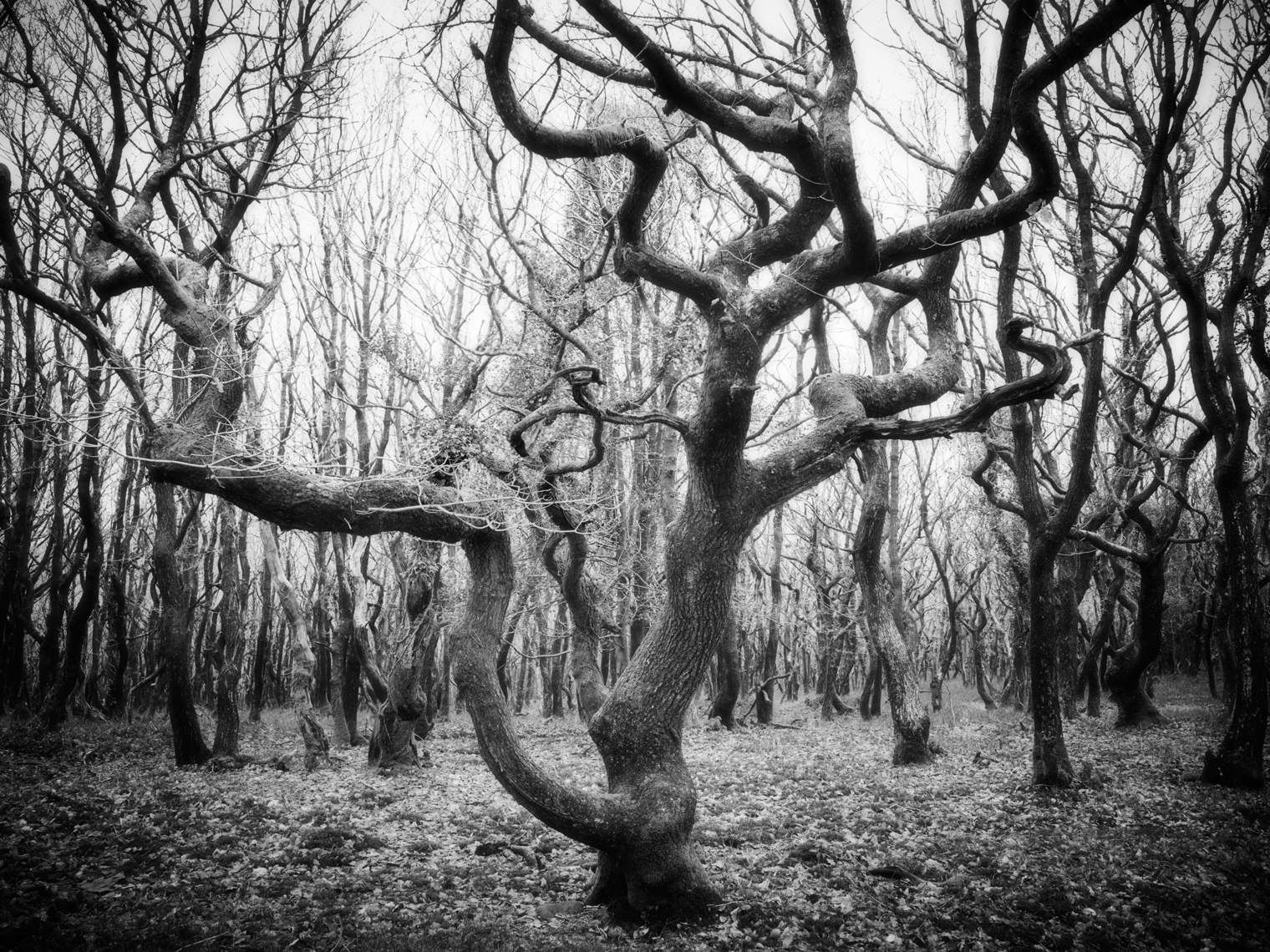 Jon Wyatt Photography - sessile oak forest at Dead Womans Ditch in North Somerset