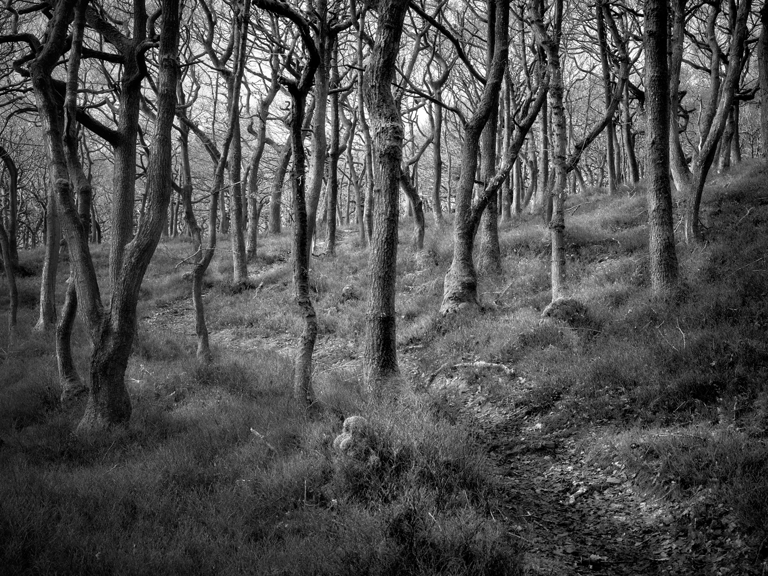 Jon Wyatt Photography - Horner wood in North Somerset