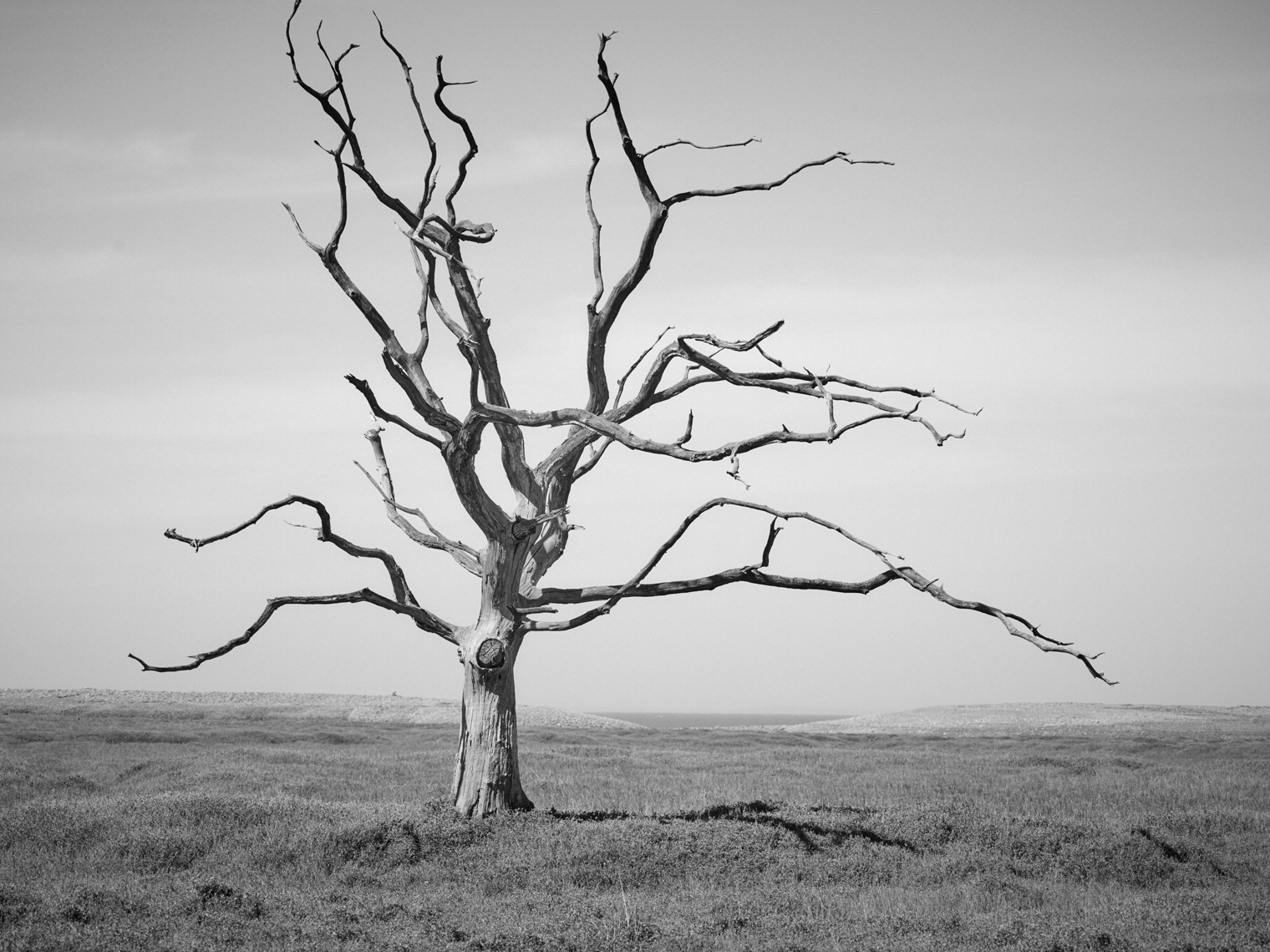 Jon Wyatt Photography - Dead tree in Porlock Saltmarsh, North Somerset