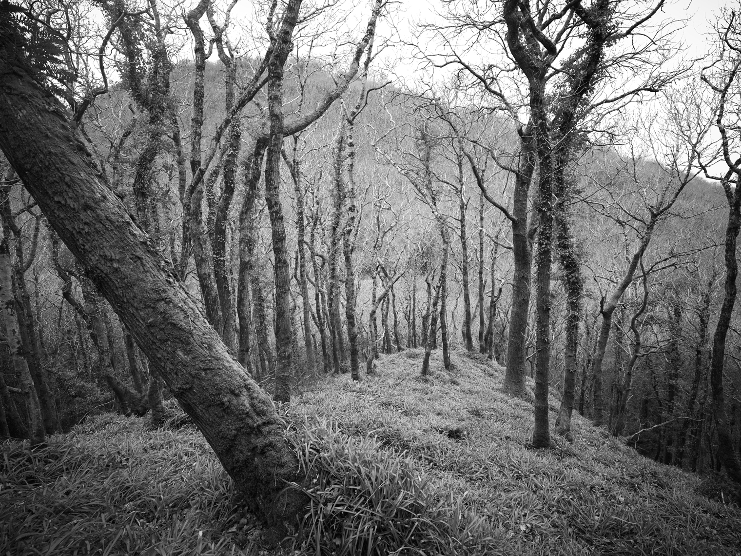Jon Wyatt Photography - Atlantic oakwoods in Culbone Wood, North Somerset