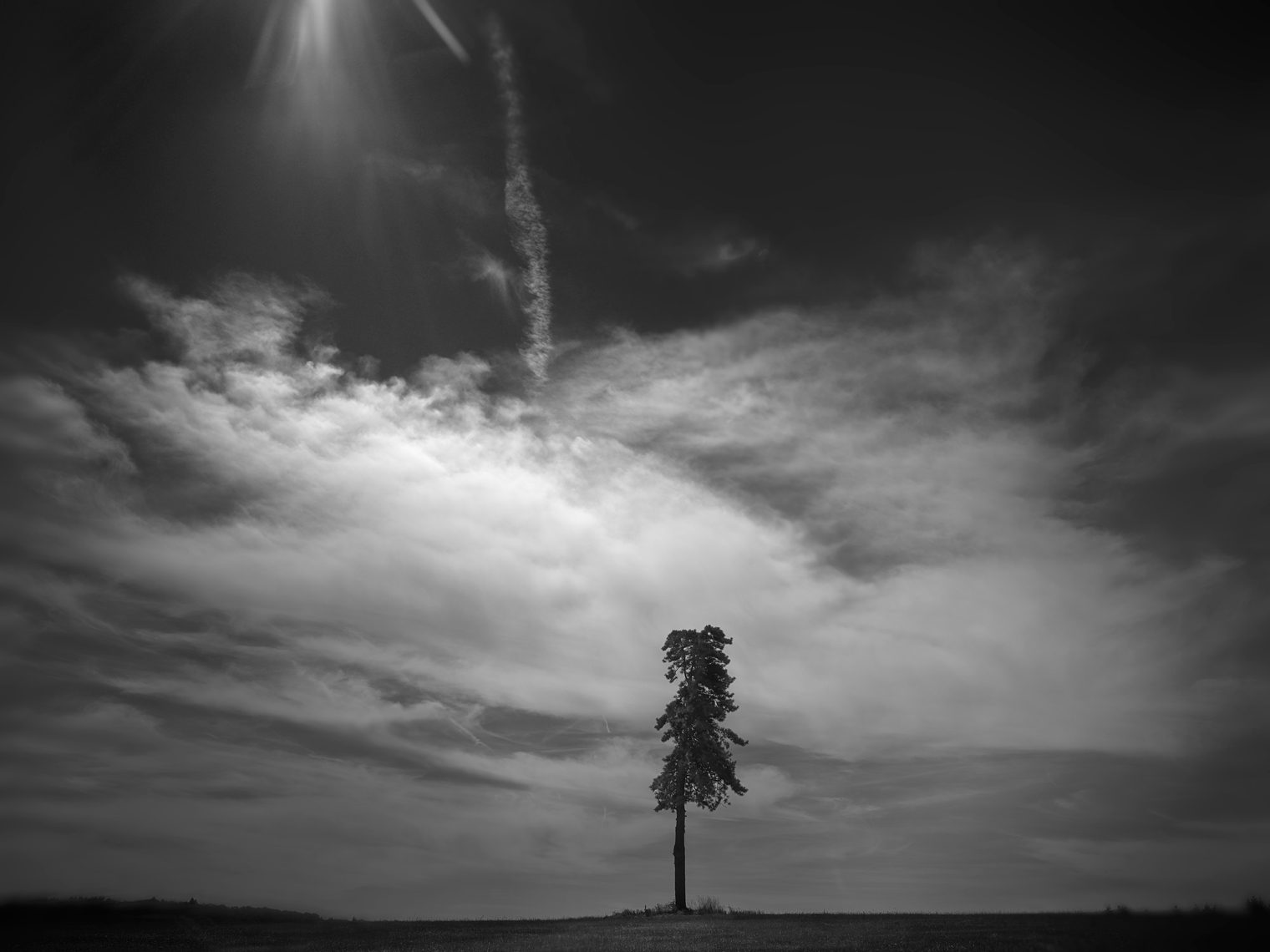 Jon Wyatt Photography - Lone tree, Rochechouart, France