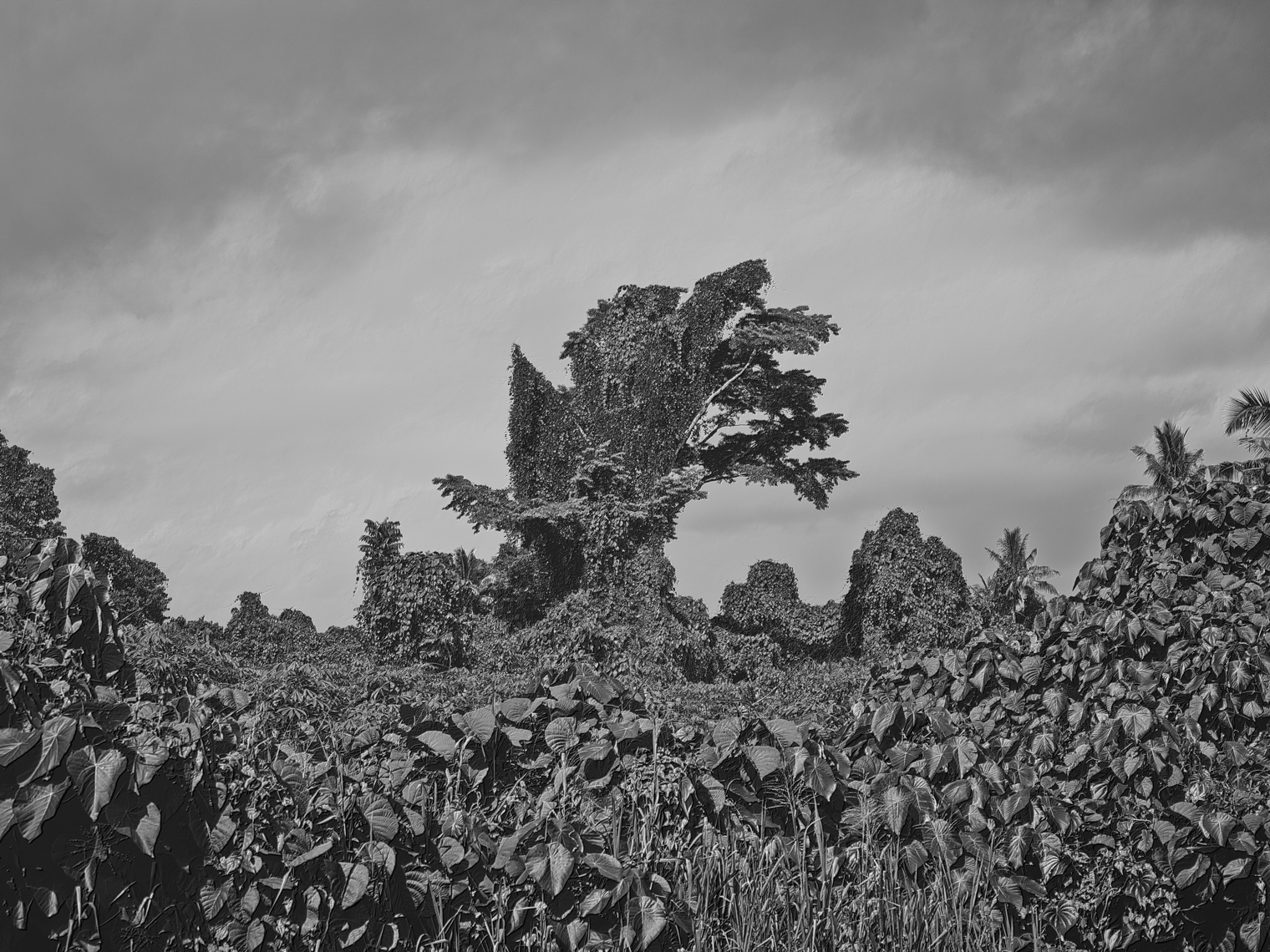 Jon Wyatt Photography - Fault Line VI - A tsunami of vegetation - invasive vines in samoa