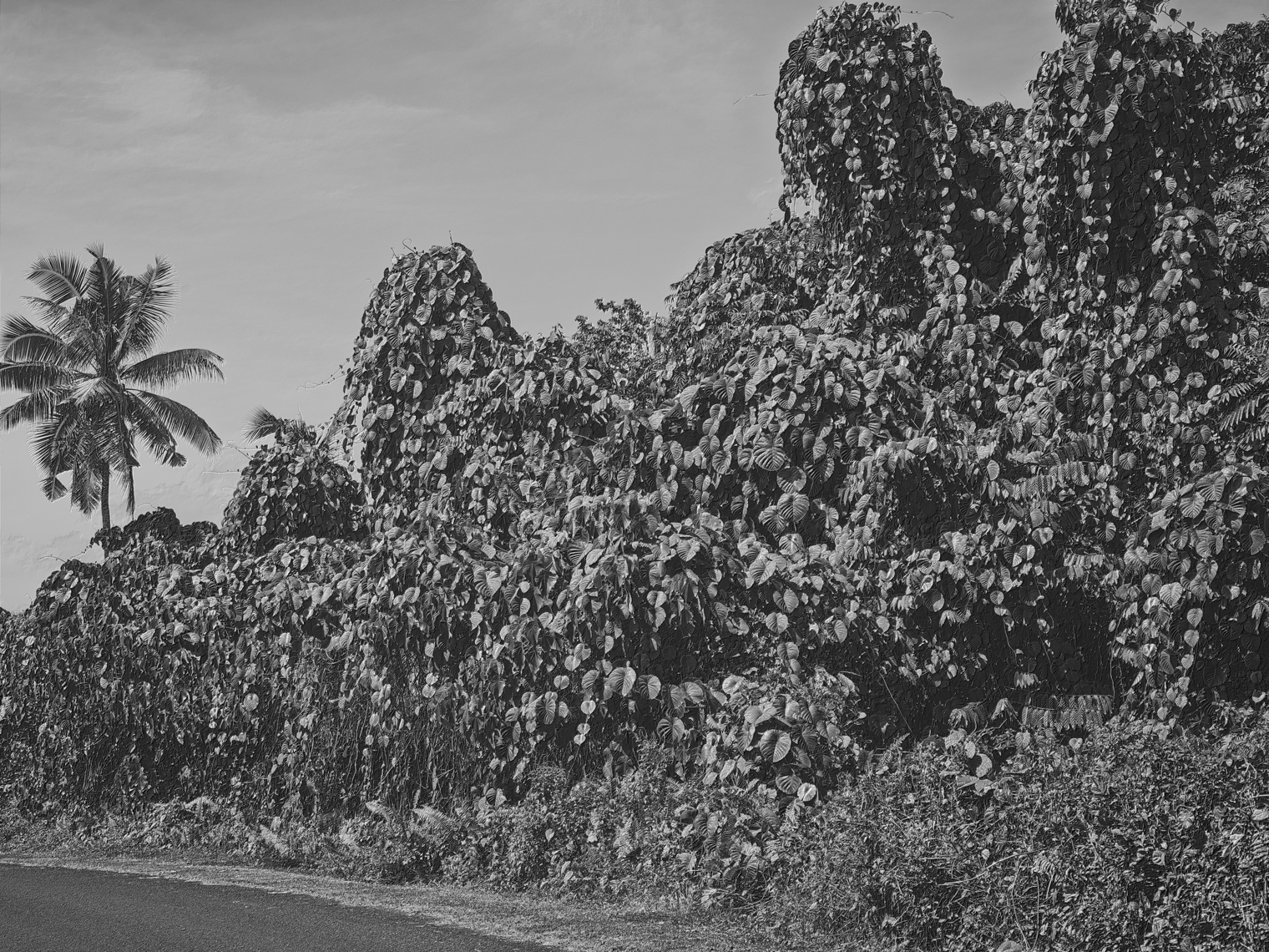 Jon Wyatt Photography - Fault Line VIII - A tsunami of vegetation - invasive vines in samoa