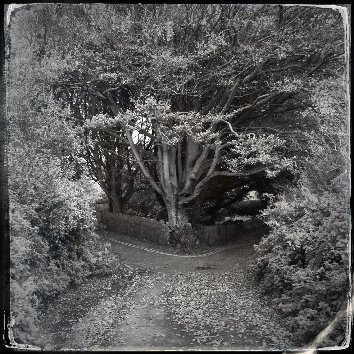 Jon Wyatt Photography - Sanctuary-PartI- woodland paths in Cornwall & Devon