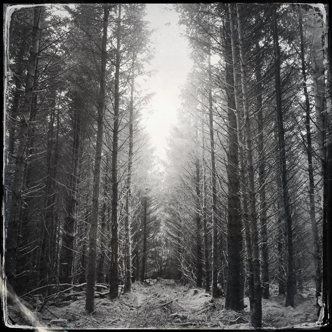 Jon Wyatt Photography - Sanctuary - Part II - woodland paths in Cornwall & Devon