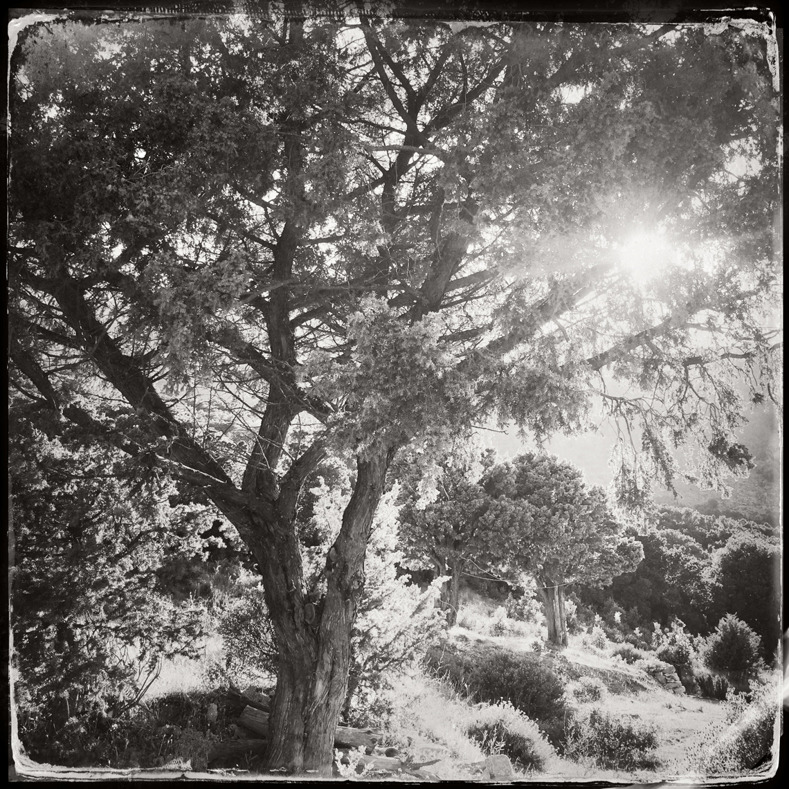 Jon Wyatt Photography - Sanctuary - Part II woodland paths in Cornwall & Devon
