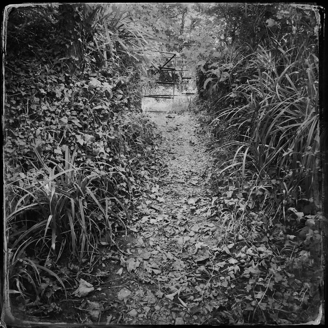 Jon Wyatt Photography - Sanctuary - Part II- woodland paths in Cornwall & Devon