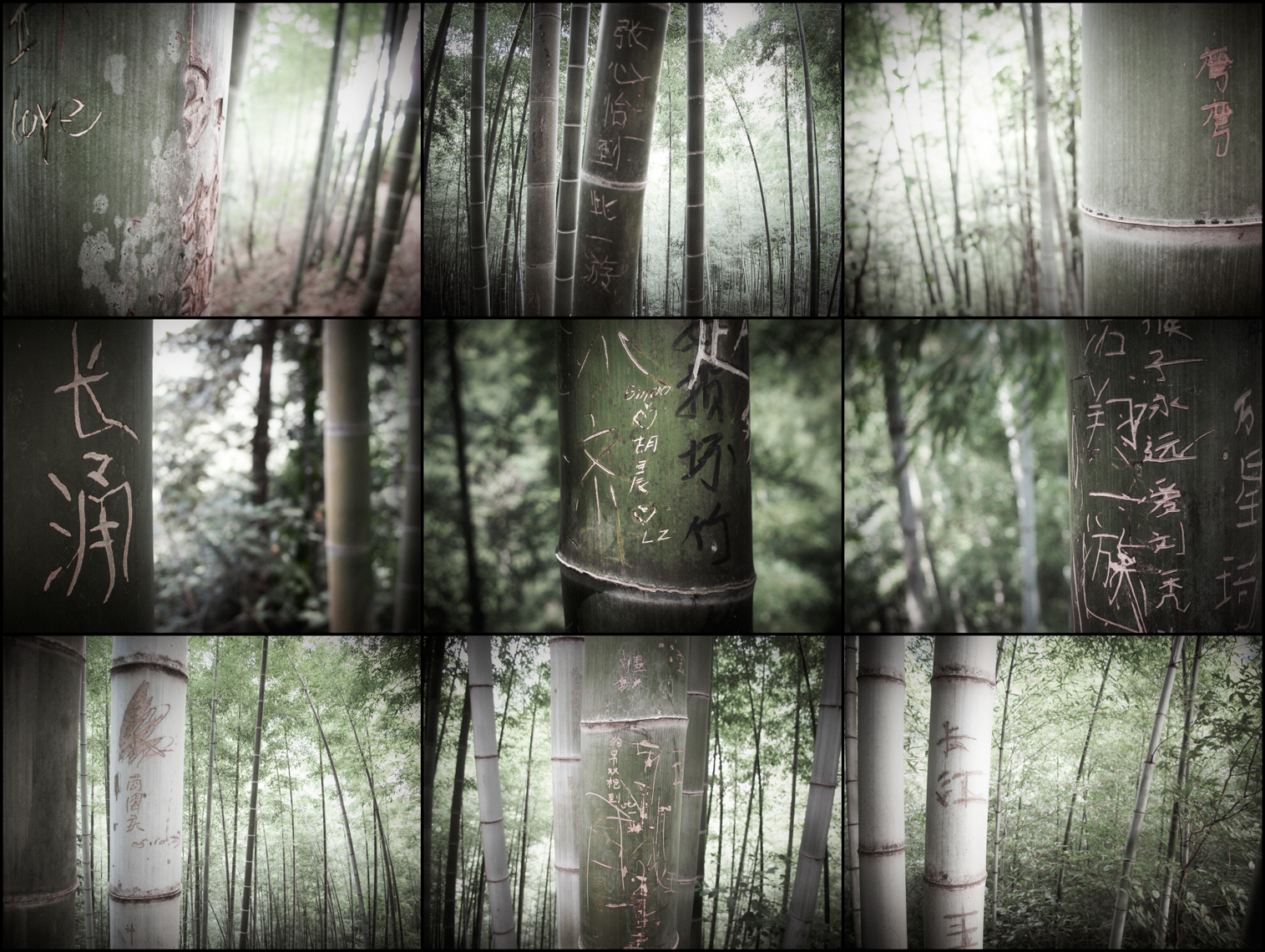 Jon Wyatt Photography - The Lost Library I - Graffiti on bamboo in bamboo forest in China