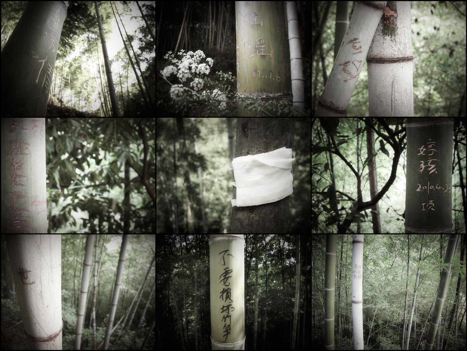 Jon Wyatt Photography - The Lost Library II - Graffiti on bamboo in bamboo forest in China