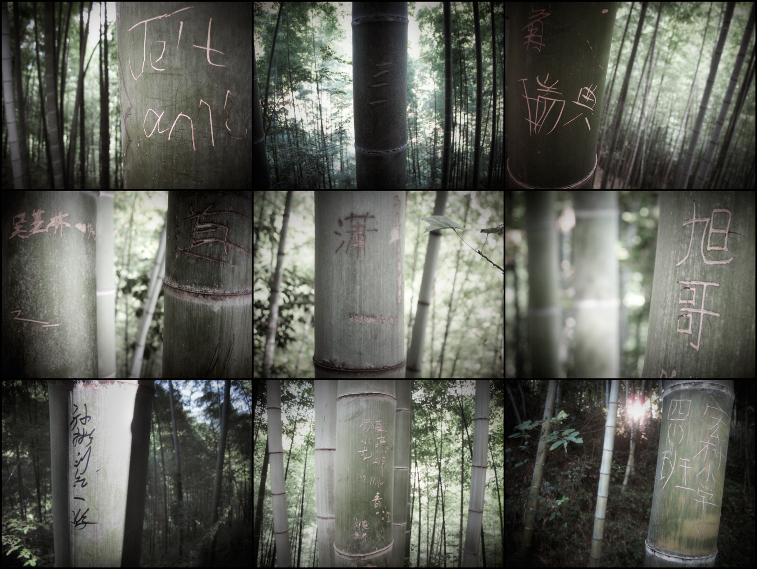 Jon Wyatt Photography - The Lost Library III - Graffiti on bamboo in bamboo forest in China