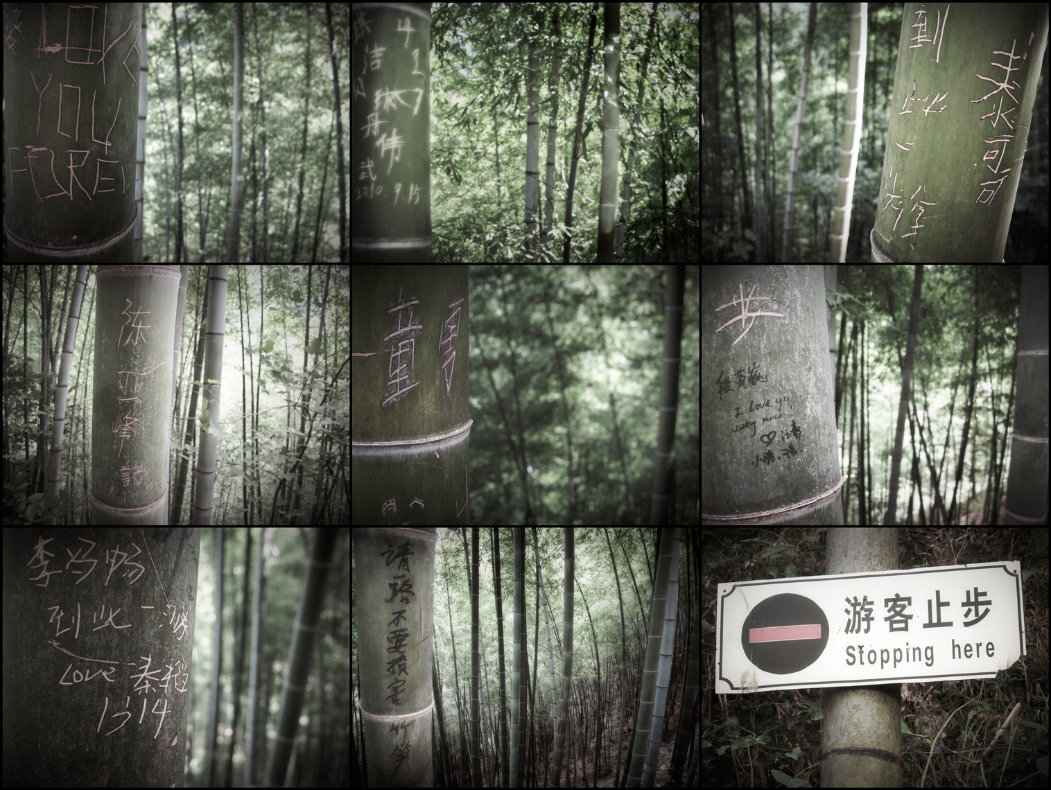 Jon Wyatt Photography - The Lost Library IV - Graffiti on bamboo in bamboo forest in China