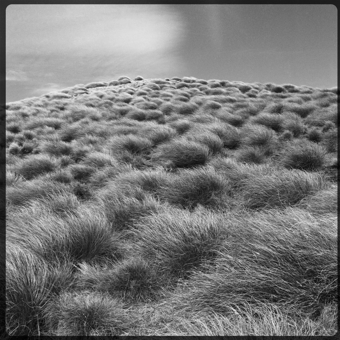 Jon Wyatt Photography - grasses in New Zealand. Hipstamatic