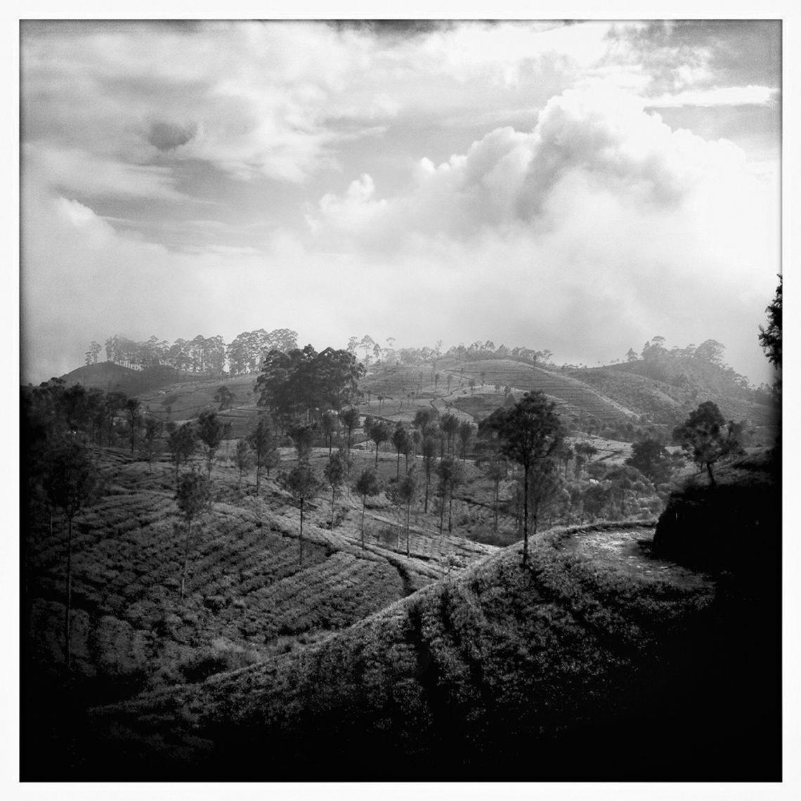 Jon Wyatt Photography - tea plantations, Sri Lanka. Hipstamatic