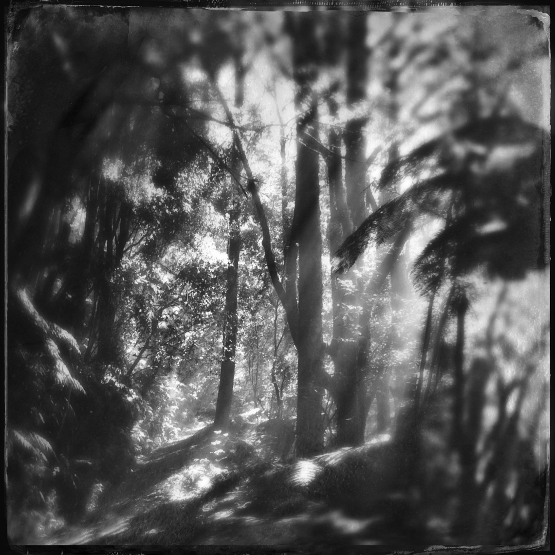 Jon Wyatt Photography - sunlight on forest path, New Zealand. Hipstamatic