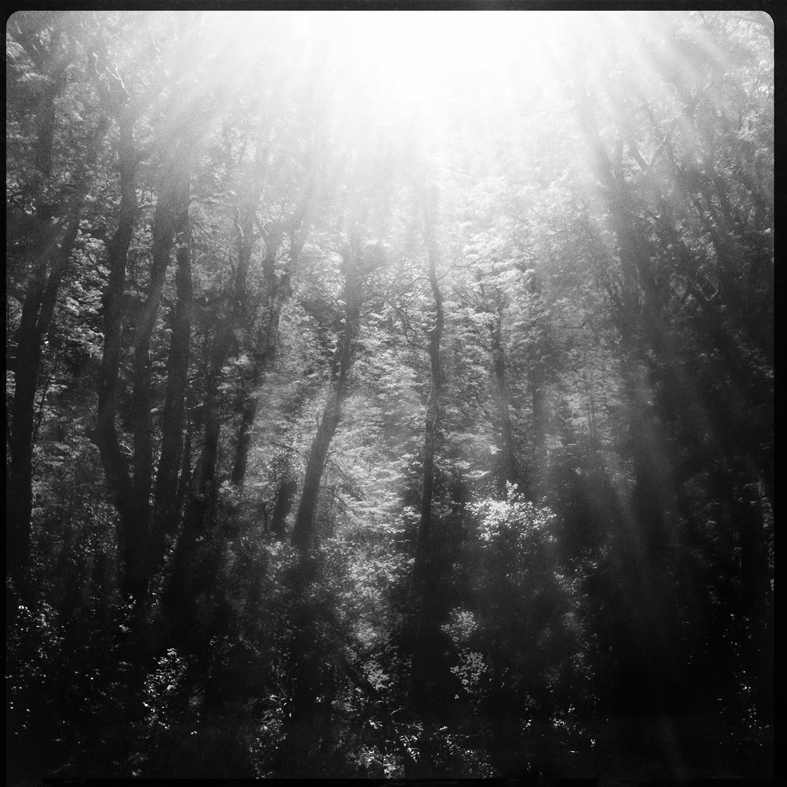 Jon Wyatt Photography - sunlight through trees. Hipstamatic
