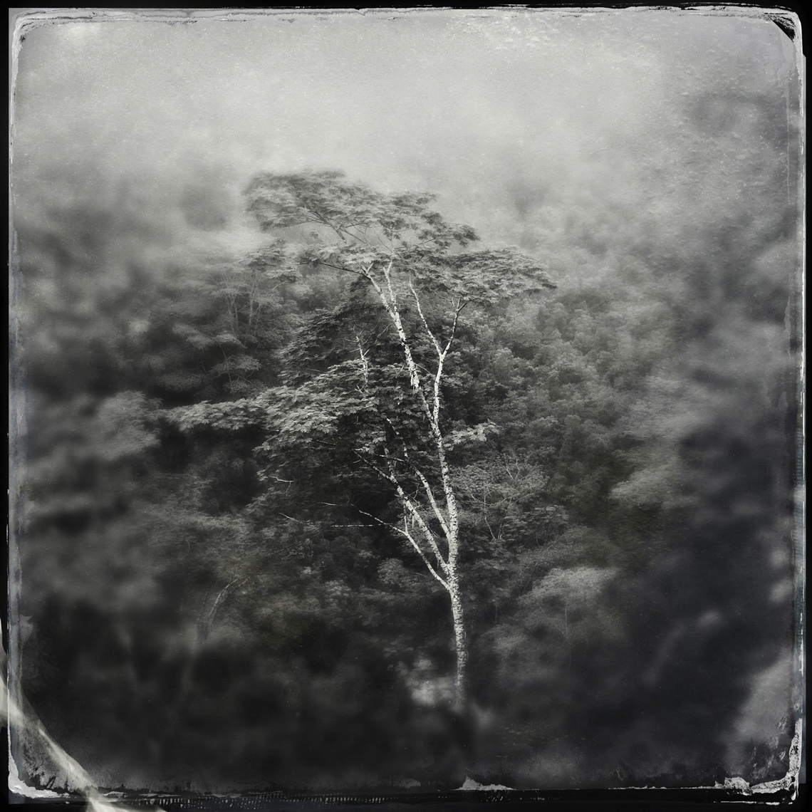 Jon Wyatt Photography - tree in volcanic crater, Samoa. Hipstamatic