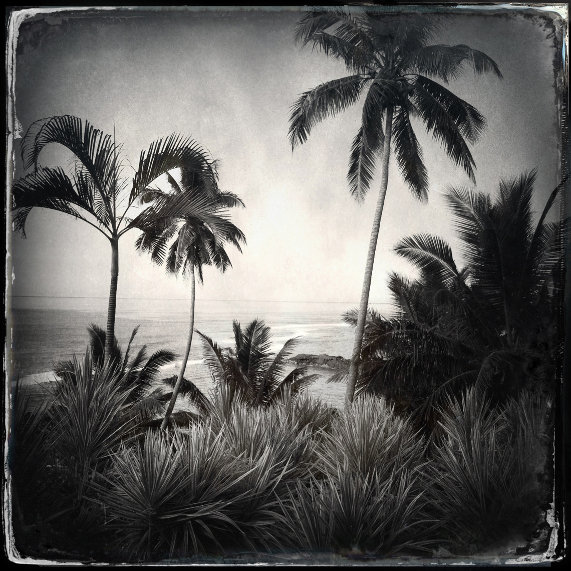 Jon Wyatt Photography - Palm trees, Samoa. Hipstamatic
