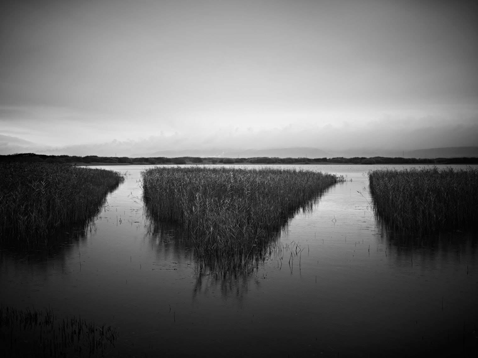 Jon Wyatt Photography - Reedbeds in Kenfig Pool, South Wales