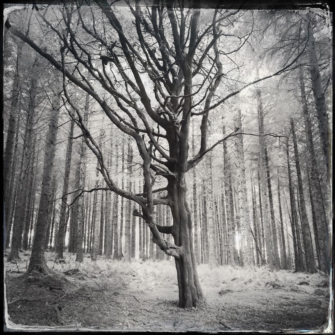 Jon Wyatt Photography - forest in Cornwall