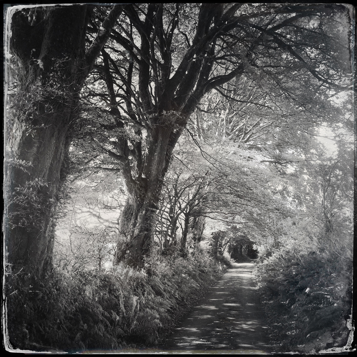Jon Wyatt Photography - woodland paths in Cornwall & Devon