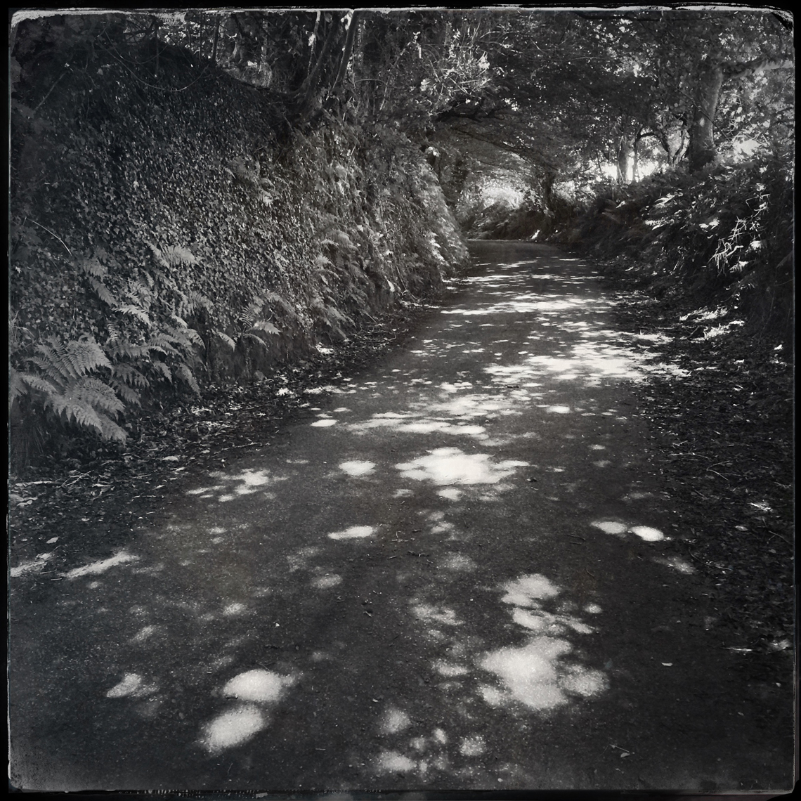 Jon Wyatt Photography - sun dappled lane in Cornwall