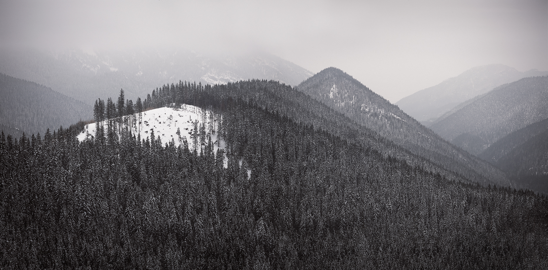 Jon Wyatt Photography - Forest in Low Tatras, near Jasna, Slovakia
